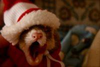 hubert yawning.jpg