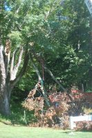 tree remove1.jpg